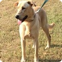 Adopt A Pet :: Jack - sweet boy - Staten Island, NY