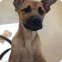 Adopt A Pet :: Colby - Miami, FL