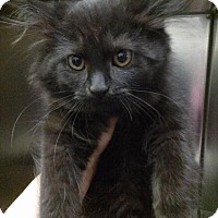 Adopt A Pet :: Beth - Northfield, OH
