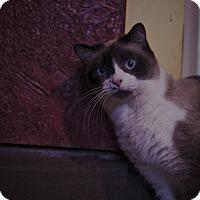 Adopt A Pet :: Emmiebelle - Covington, KY