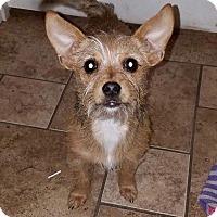 Adopt A Pet :: Ellen-pending adoption - Manchester, CT