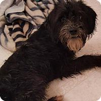 Adopt A Pet :: Dover - Baltimore, MD