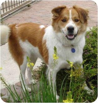 Tucker Dog Adoption Ca