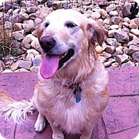 Adopt A Pet :: Chloe - Denver, CO