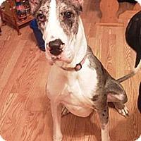 Adopt A Pet :: Juneaux - Manassas, VA