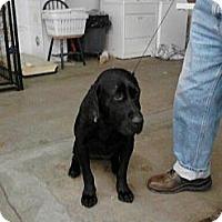 Adopt A Pet :: Gem - Wahoo, NE