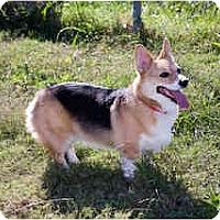 Adopt A Pet :: Layla - Inola, OK
