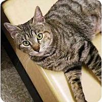 Adopt A Pet :: Gabanna - Irvine, CA