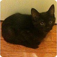 Adopt A Pet :: Willow - Sterling Hgts, MI