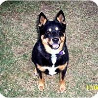 Adopt A Pet :: Kassie - Scottsdale, AZ