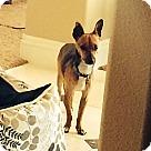 Adopt A Pet :: Mindi