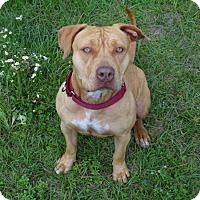 Adopt A Pet :: Kiwi - Jupiter, FL