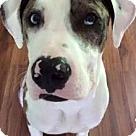 Adopt A Pet :: Harrington