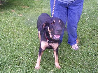 German Shepherd Dog Mix Dog for adoption in Lake Orion, Michigan - Byron