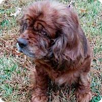 Adopt A Pet :: Coco 15-123 - Parker, CO