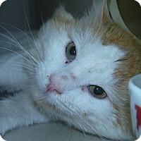Adopt A Pet :: Mufasa - Hamburg, NY