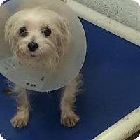 Adopt A Pet :: Trusty - Miami, FL