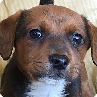 Adopt A Pet :: Maggie - Staunton, VA