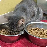 Adopt A Pet :: Miss Pretty - Byron Center, MI