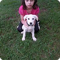 Adopt A Pet :: Suzy (ETAA) - Allentown, PA