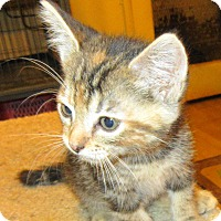 Adopt A Pet :: Olivia - Palm Springs, CA