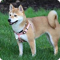 Adopt A Pet :: Ayame - Manassas, VA