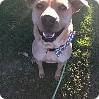 Adopt A Pet :: Ziggy - Unionville, PA