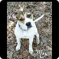 Adopt A Pet :: Max - Toms River, NJ