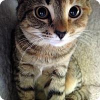 Adopt A Pet :: Lovey - Fairfax, VA