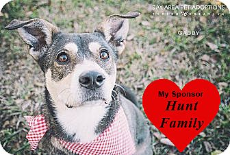 Terrier (Unknown Type, Medium) Mix Dog for adoption in San Leon, Texas - Gabby