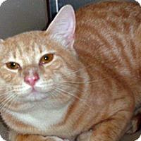 Adopt A Pet :: Floyd - Wildomar, CA