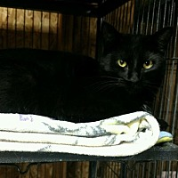 Adopt A Pet :: Onyx (Midnight) - Saginaw, MI