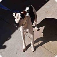 Adopt A Pet :: Gabriella - Newnan City, GA