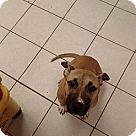 Adopt A Pet :: Spirt