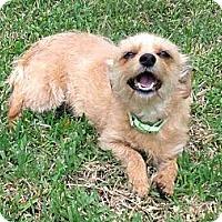 Adopt A Pet :: Mona - Houston, TX