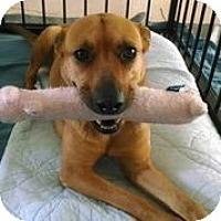 Adopt A Pet :: Chula - Austin, TX