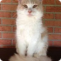 Adopt A Pet :: John John - Troy, OH