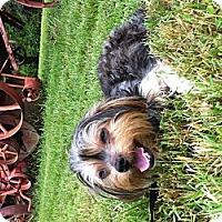 Adopt A Pet :: Miss Wiggles - Nashville, TN
