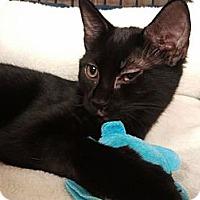 Adopt A Pet :: Emi (KL) - Little Falls, NJ