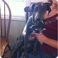 Adopt A Pet :: Moe - Richmond, VA