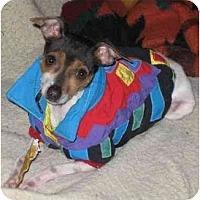 Adopt A Pet :: Howlie Ratdell - Topeka, KS