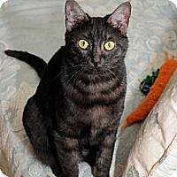 Adopt A Pet :: Nesse Rose - Monroe, GA
