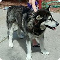Adopt A Pet :: KODA - Seattle, WA