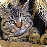 Adopt A Pet :: Wigden - Caistor Centre, ON