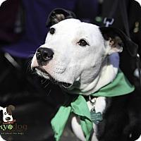 Adopt A Pet :: Kiera - Alpharetta, GA