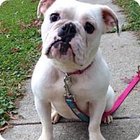 Adopt A Pet :: Elsa - Park Ridge, IL