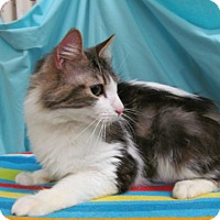 Adopt A Pet :: Fletcher - Waldorf, MD