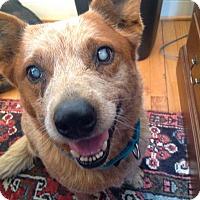 Adopt A Pet :: Wilma (SPECIAL NEEDS) - Midlothian, VA