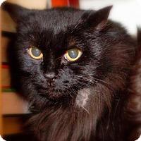 Adopt A Pet :: Sassy - Somerville, MA