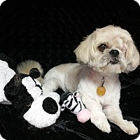 Adopt A Pet :: Tori Turner - Urbana, OH